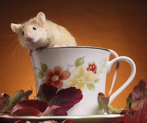 adorable, animals, and rats image
