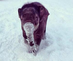 elephant, cute, and snow image