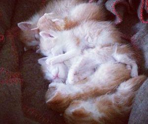 kitten, kittens, and sleep image