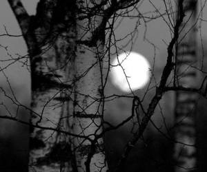 black and white, branches, and dark image
