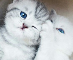 blue, cat, and little image