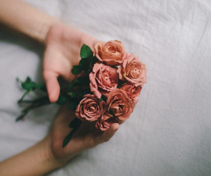 flowers, rose, and indie image