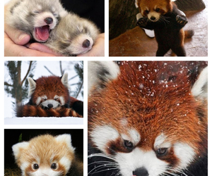 adorable, Collage, and i want one image