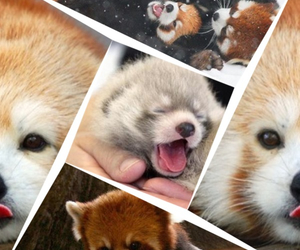 adorable, Collage, and cute image