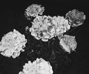 flowers, alternative, and black image