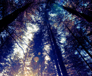 nature, trees, and tress image