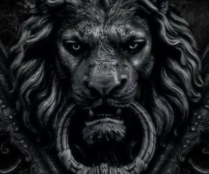 lion, black, and door image