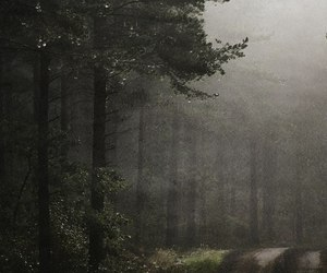 dark, fog, and forest image