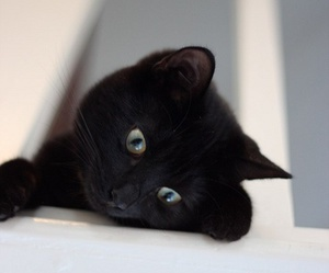 lovely, black kitty, and cute image