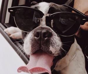 dog, animal, and sunglasses image