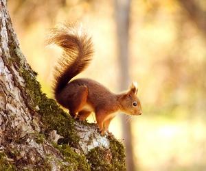 ardilla and squirrel image