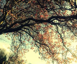 pink flowers, spring, and tree image