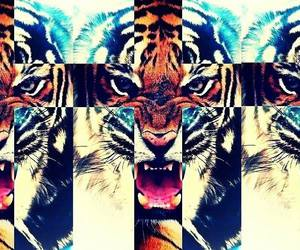 tiger, animal, and iphone image