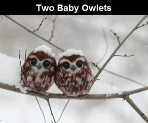 cute, owl, and baby image