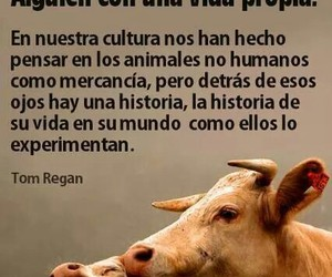 amor, Animales, and respeto image