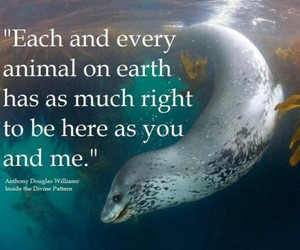 Animal Rights Quotes Stunning Image About Quote In Animal Rightsclare On We Heart It