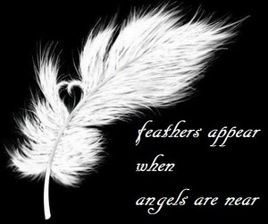 angel, feather, and quote image