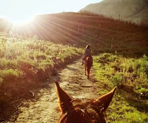 horse, nature, and perfect image