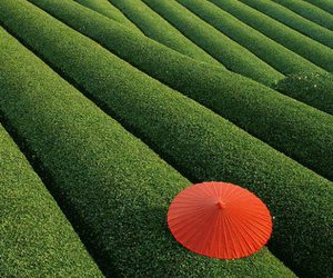 china, green, and tea fields image
