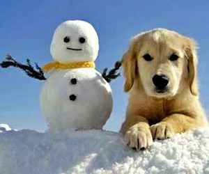 christmas, snowman, and puppy image