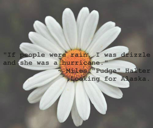 drizzle, flower, and hurricane image