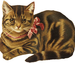cat, bow, and gif image