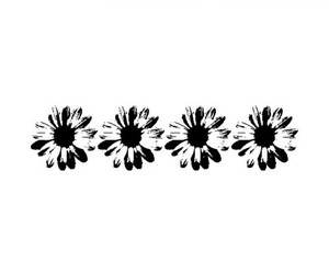 overlay, transparent, and daisy image