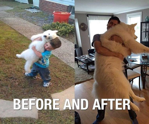 dog, after, and before image