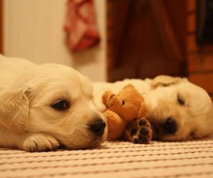 lovely, cute, and puppies image