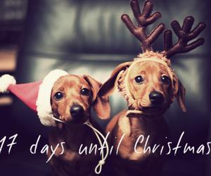 dog#days#until#christmas image