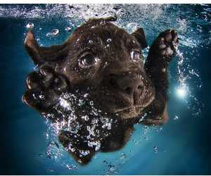 dog, puppies, and water image