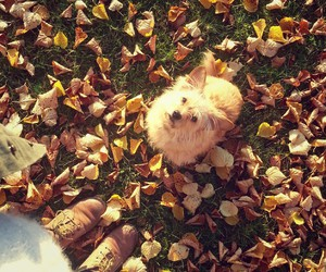 automn, dog, and leaves image