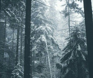 fade, forest, and winter image