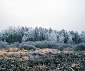 autumn, forest, and winter image