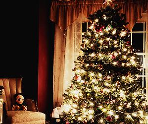 winter, bear, and christmas tree image