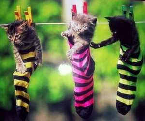 cats, color, and funny image