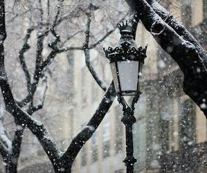 christmas, cold, and light image