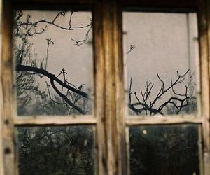 window, tree, and vintage image