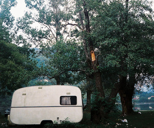 tree, vintage, and nature image