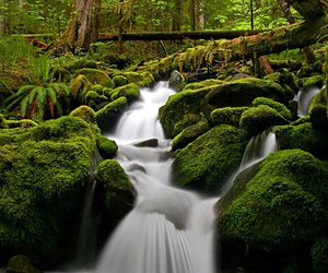 forest, waterfall, and green image