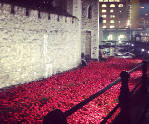 london, poppies, and remembrance day image