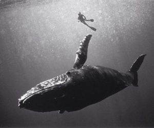 whale and black and white image