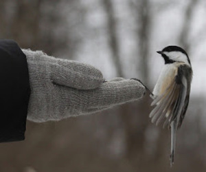 bird, beautiful, and cold image