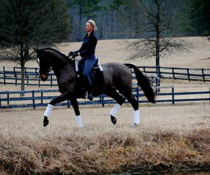 dressage, passion, and equestrian image