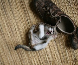 kitten, shoelaces, and cute image