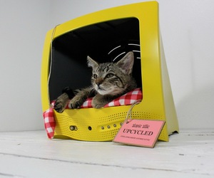 cat and tv image