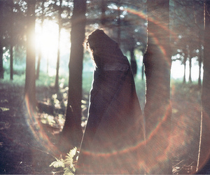 forest, lensflare, and shadow image