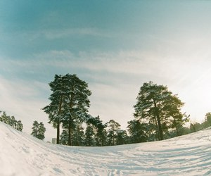 nature, trees, and winter image