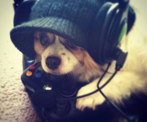 dog, player, and xbox image