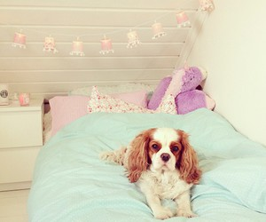 dog, room, and puppy image